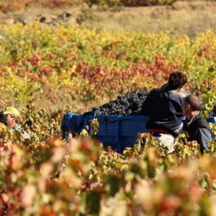 La vendimia inunda la Ruta del Vino de Rioja Alavesa de planes y actividades para todos