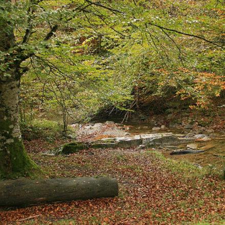Conocer la Selva de Irati desde la oficina de turismo de Ochagavía