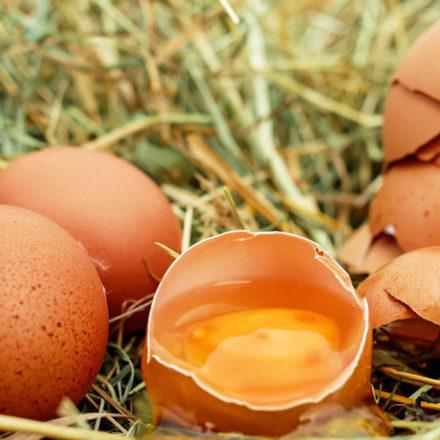 Bilbao celebra el Día Mundial del Huevo