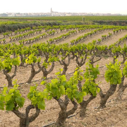 Ayudas de promoción al sector vinícola