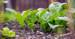De legumbres y demás productos ecológicos